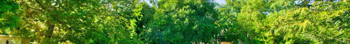 cropped-garden-trees-pic.jpg